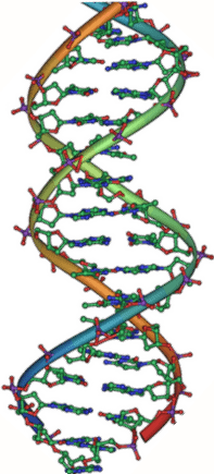 DNA_double_helix Mast Cell Activation Syndrome Histamine Intolerance Mast Cell 360