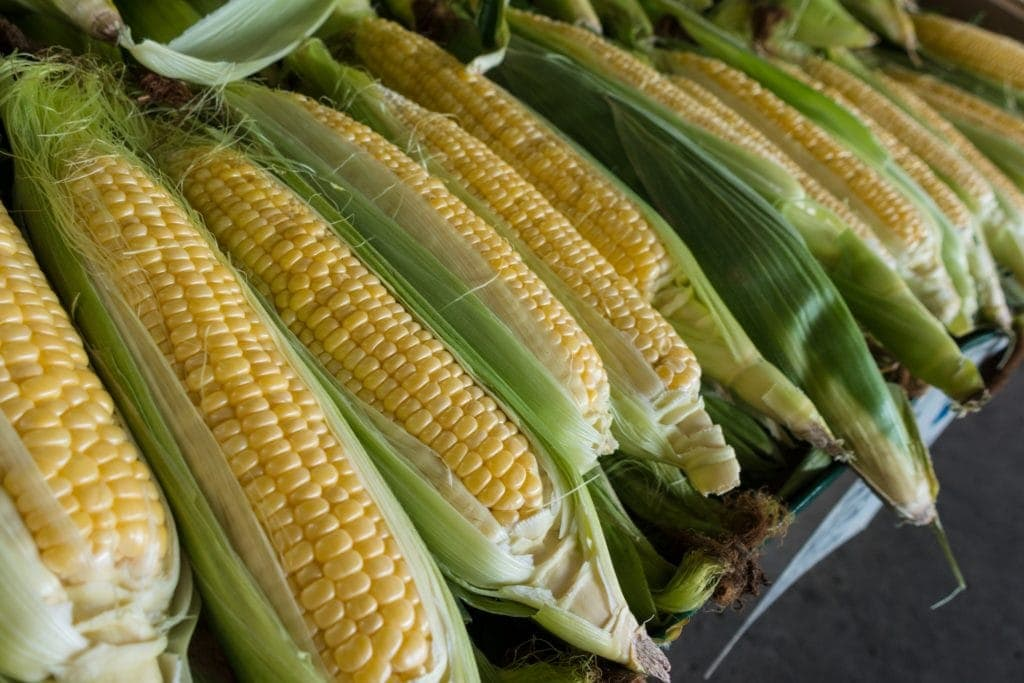 Corn Mast Cell 360