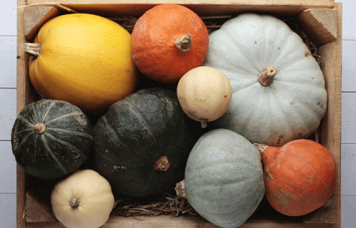 Lectins, Low Lectin Foods, and the Mast Cell Connection – for those with Mast Cell Activation Syndrome or Histamine Intolerance