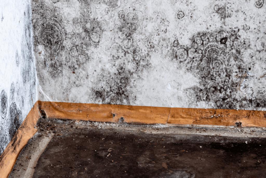 Moldy Wall 2 Mast Cell 360